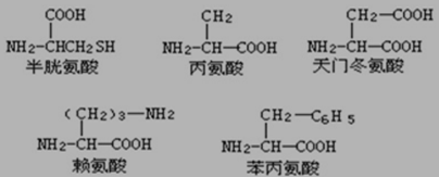 那么将该178肽彻底水解后将会得到_____个赖氨酸,_____个天冬氨酸.